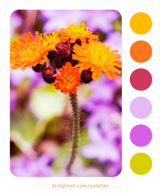 0003-Orange-Flowers-Colour-Palette-LJKnight.jpg
